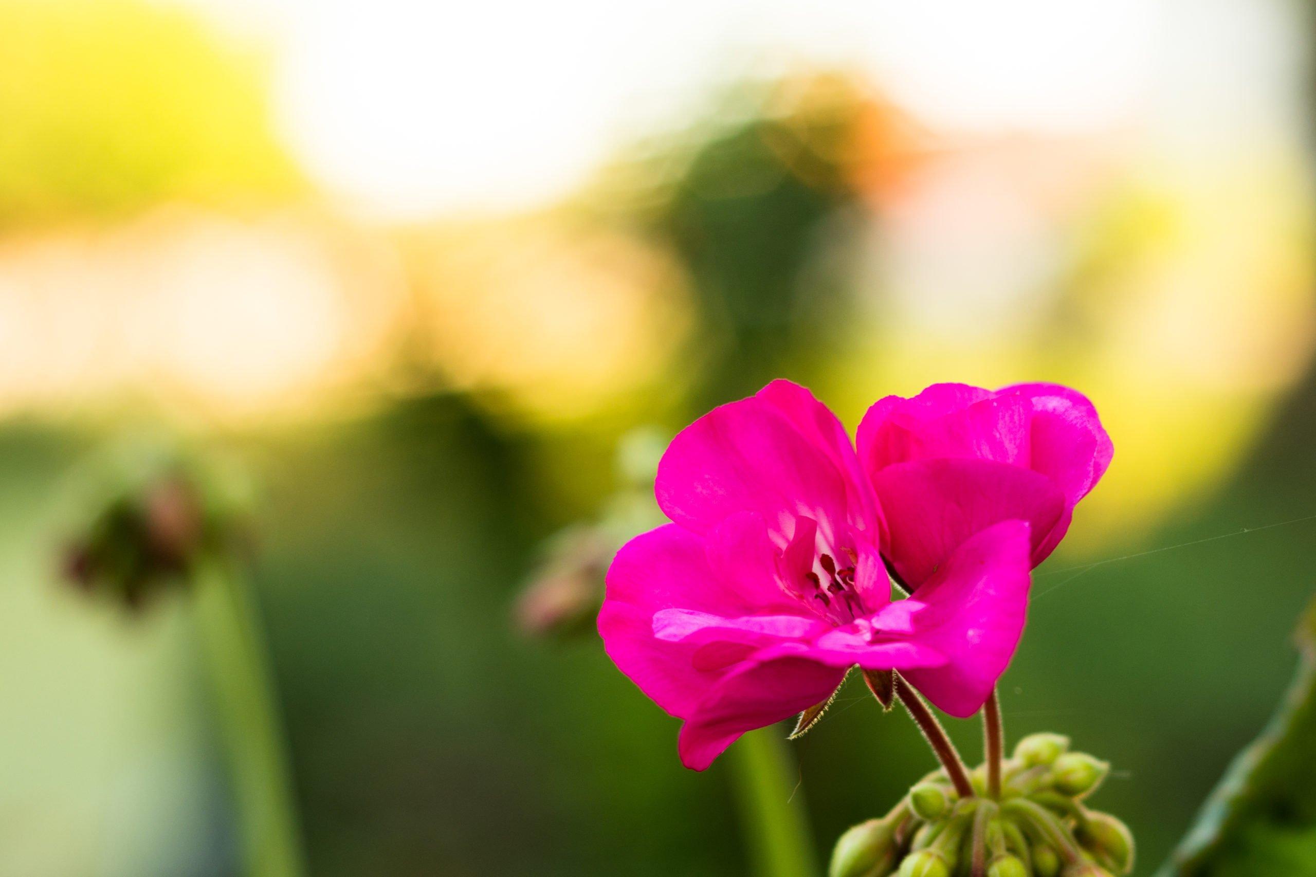 Fleur et toile...